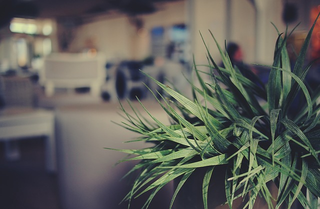 7 Indoor Plants which Act as Air Purifiers too