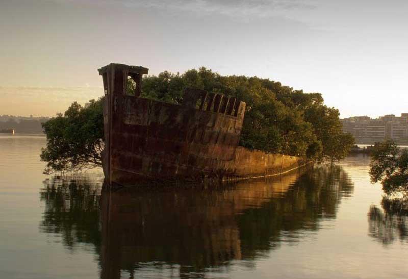 Homebush Bay SS Ayrfield