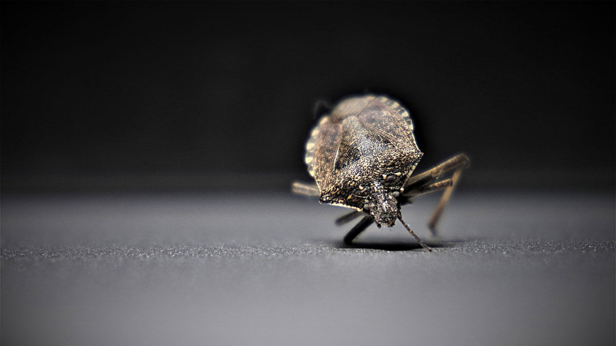 Bed Bugs in Car